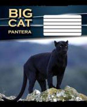 Тетрадь А5 48л (клетка) 2057к Большие кошки ТА5.4811.2057к